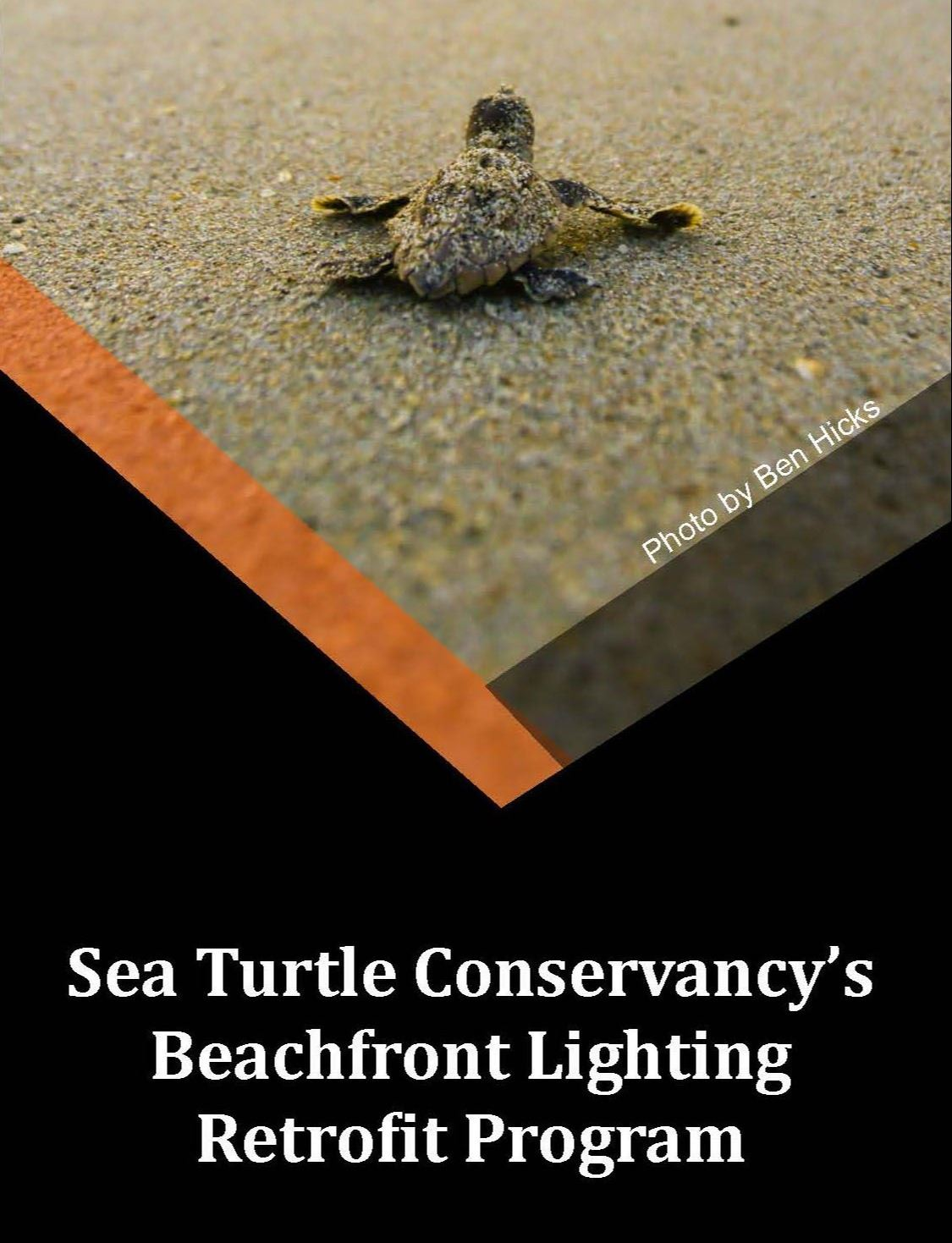 sea turtle lighting retrofit graphic for social media